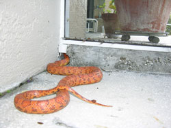 \ Snake Proof\  Your Home Garage and Sheds & Preventing Negative Encounters with Snakes